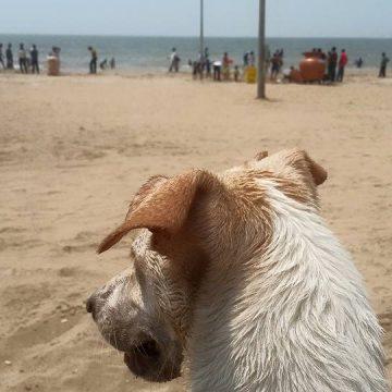 Zelda Juhu Beach