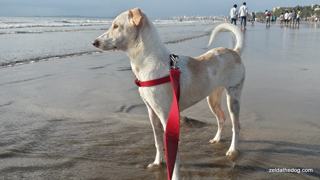 Zelda at the Juhu Beach (1)