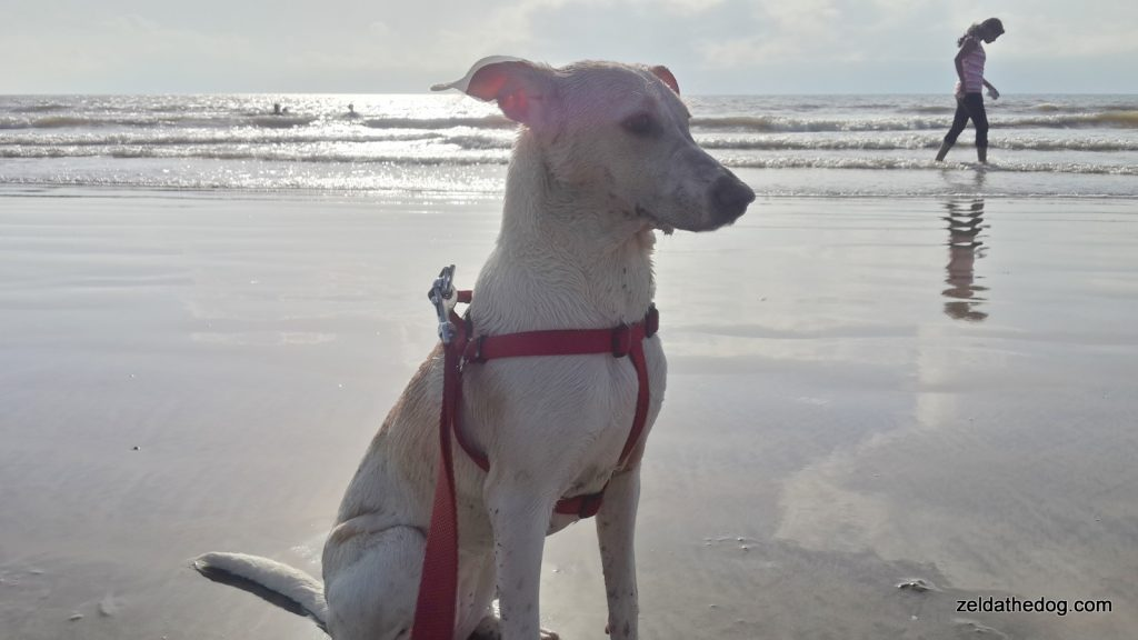 Zelda at the Juhu Beach (2)