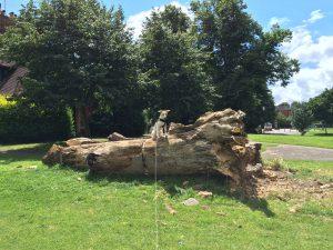 Zelda - Sunny Day in Palmer Park